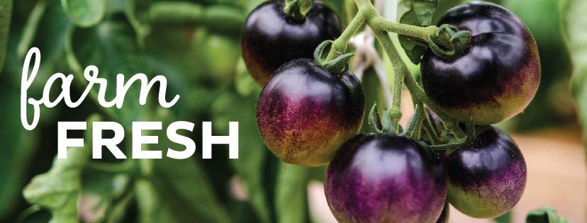 farm fresh_tomatoes-01