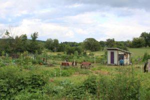 Community Gardening 101